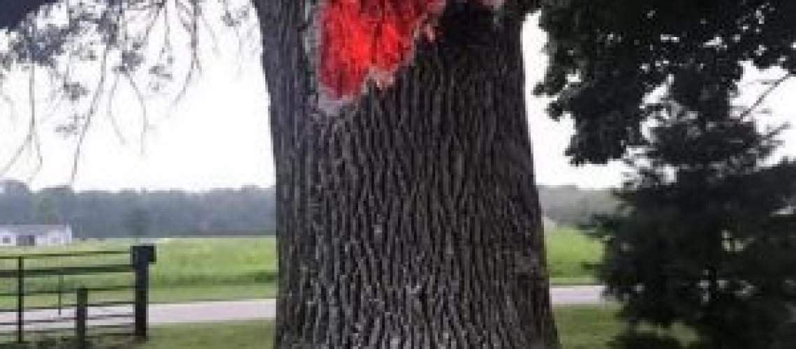 Tree burning from inside out